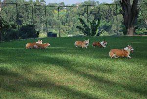 Vida Mansa Pet Center - Adestramento e Treinamento de Pet